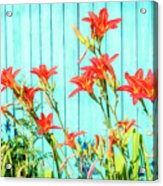 Tiger Lily And Rustic Blue Wood Acrylic Print
