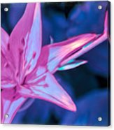 Tiger Lily Abstract Acrylic Print