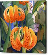 Tiger Lily Parachutes Acrylic Print