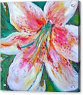 Tiger Lily Passion Acrylic Print
