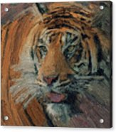 Tiger On Hunting Acrylic Print