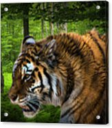 Tiger On The Prowl Acrylic Print