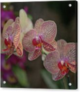 Tiger Orchid Acrylic Print