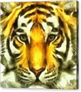 Tiger Painted Acrylic Print