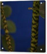 Tiger Plant I Acrylic Print