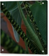 Tiger Plant II Acrylic Print