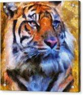 Tiger Portrait Acrylic Print by Jai Johnson