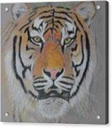 Tiger Portrait Acrylic Print