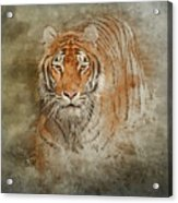 Tiger Splash Acrylic Print