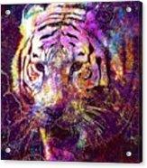 Tiger Surreal Painting Predator  Acrylic Print