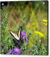 Tiger Swallowtail And Bee Acrylic Print