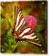 Zebra Swallowtail Butterfly - Digital Paint 3 Acrylic Print