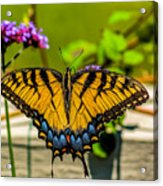 Tiger Swallowtail Butterfly By Fence Acrylic Print