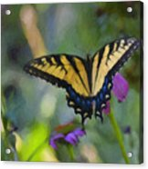 Tiger Swallowtail Painting Acrylic Print