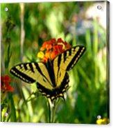 Tiger Tail Beauty Acrylic Print