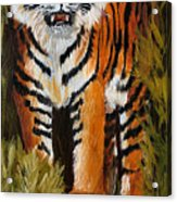 Tiger Wildlife Art Acrylic Print