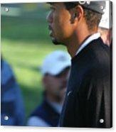 Tiger Woods IIi Acrylic Print by Chuck Kuhn