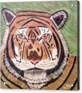 Tigerish Acrylic Print