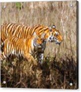 Tigers Burning Bright Acrylic Print