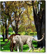 Tigers By The City Acrylic Print