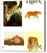 Tigers Montage Acrylic Print