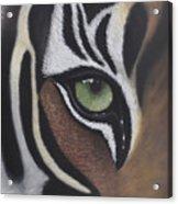 Tiger's Eye Acrylic Print