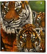 Tigers family oil painting Acrylic Print