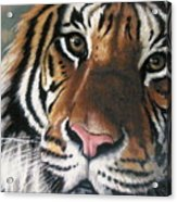 Tigger Acrylic Print by Barbara Keith