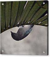 Tightrope Walker Bird Acrylic Print