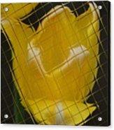 Tiled Yellow Tulip Acrylic Print