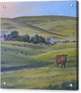 Till The Cows Come Home Acrylic Print