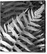 Tilted Fern Acrylic Print