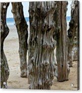 Timber Textures Lv Acrylic Print