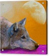 Timber Wolf Under The Moon Acrylic Print by Tina B Hamilton