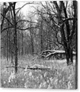 Timberland Infrared No1 Acrylic Print