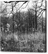 Timberland Infrared No2 Acrylic Print