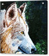 Timberwolf Acrylic Print