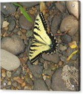 Time For A Rest Acrylic Print
