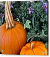 Time For Pumpkins In The Flower Beds Acrylic Print