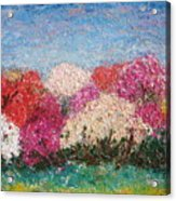 Time Of Rhododendron Acrylic Print