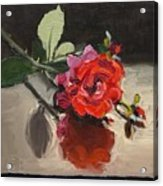 Time Of Roses Acrylic Print