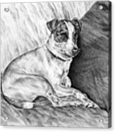 Time Out - Jack Russell Dog Print Acrylic Print by Kelli Swan