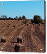 Time To Bale In Color Acrylic Print