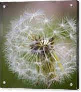 Time To Fly Acrylic Print