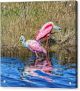 Time To Get Ready For Dinner Acrylic Print