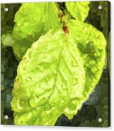 Time Travel Summer Leaves Acrylic Print