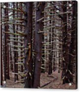 Timeless Forest Acrylic Print