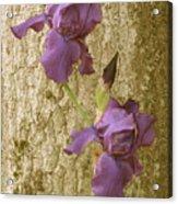 Timeless Iris  Acrylic Print