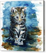 Timid Kitten Acrylic Print