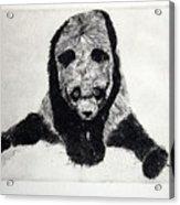 Timido Panda Acrylic Print
